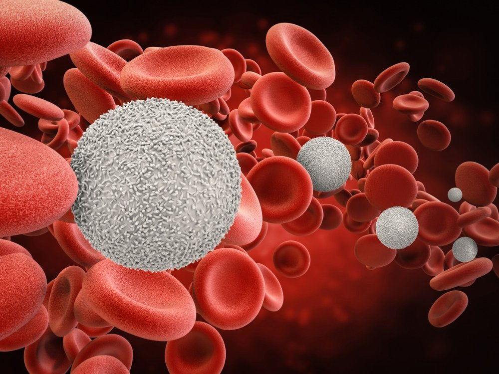 white-blood-cells-with-red-blood-cells-picture.jpg
