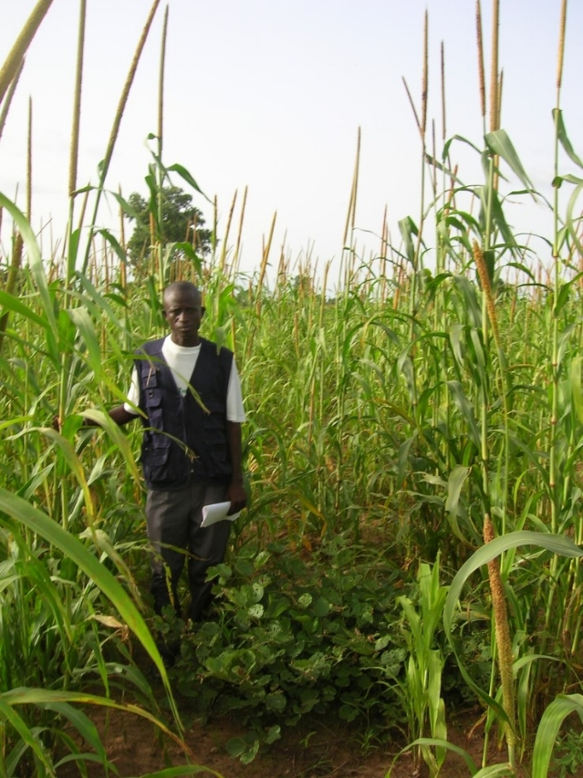 Bright, B, I. Diedhioub, R. Bayala, K. Assigbetse, L. Chapuis-Lardy, Y. Ndourc, R.P. Dick. 2017    Long-term Piliostigma reticulatum intercropping in the Sahel: Crop productivity, carbon sequestration, nutrient cycling, and soil quality. Ag. Ecosyt. & Envion, 242: 9–22.