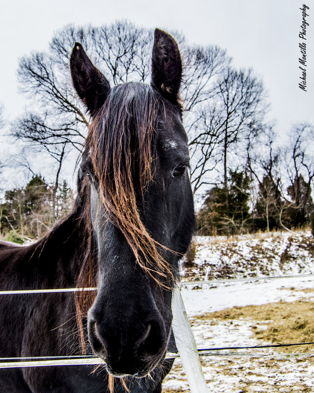 horse_orig.jpg