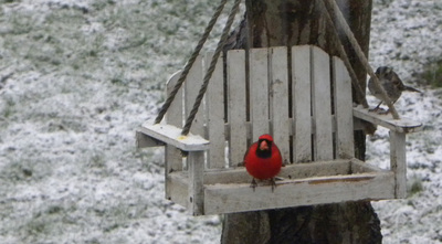 Cardinal in the Snow by Cassey Elder