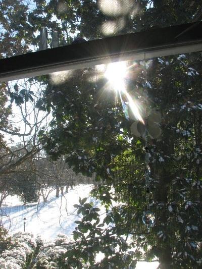 Snow Angel Light by Ingrid Swann