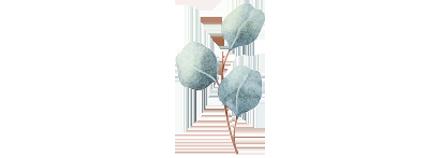botanical1.png