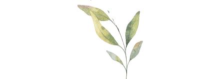 botanical2.png