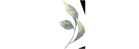 botanical6.png