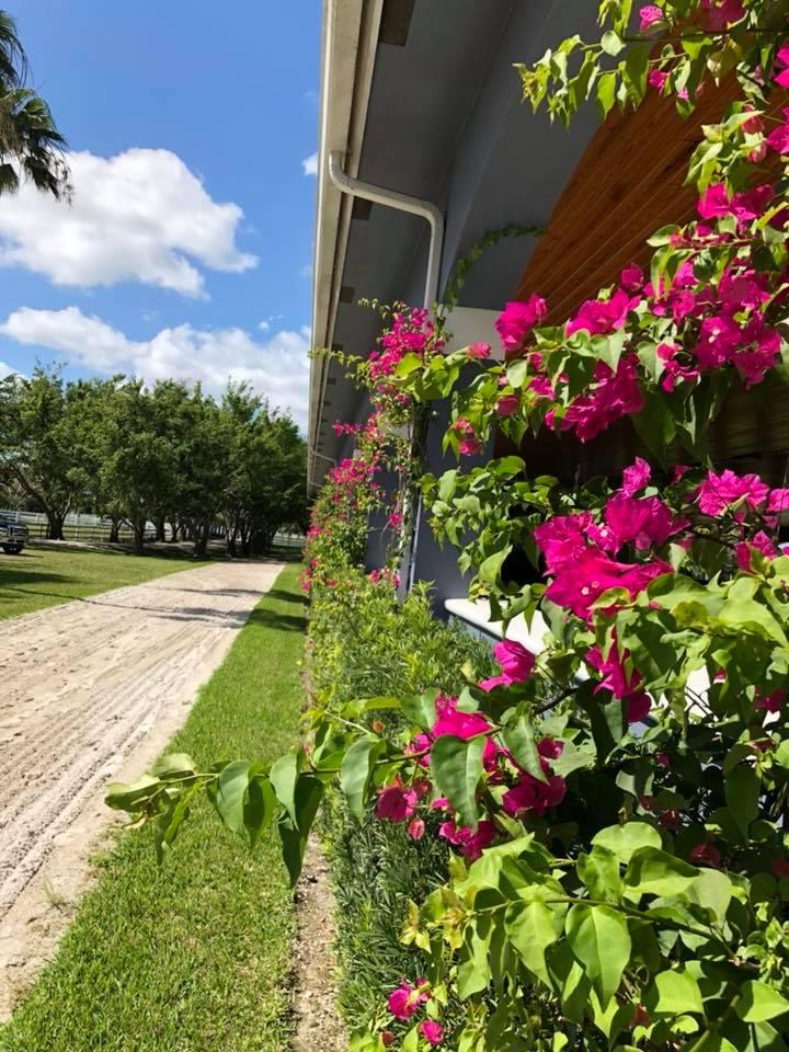 FSF Flowers.jpg