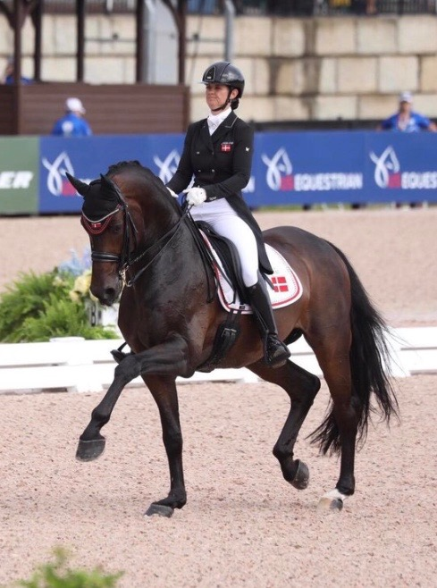 Mane Stream Belstaff, owned by Rowan O'Riley, was selected to the Danish Team for the 2018 World Equestrian Games.