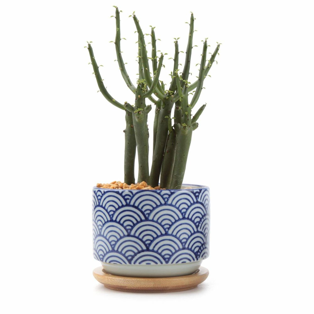 Japanese Style Ceramics - Simple, adorably small, and with it's crisp indigo and white printed ceramic is effortless and chic.