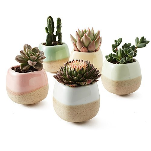Pastel Dipped Ceramics - Not only a great deal, this 5 piece dipped glazed ceramic set is scrumptious and a really cute way to display your succulents.