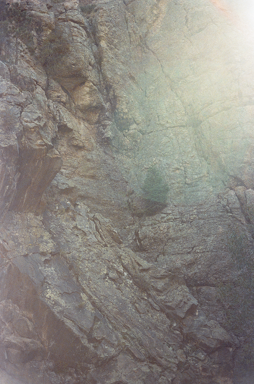 jeffreymschad_Denver Pine_01.jpg