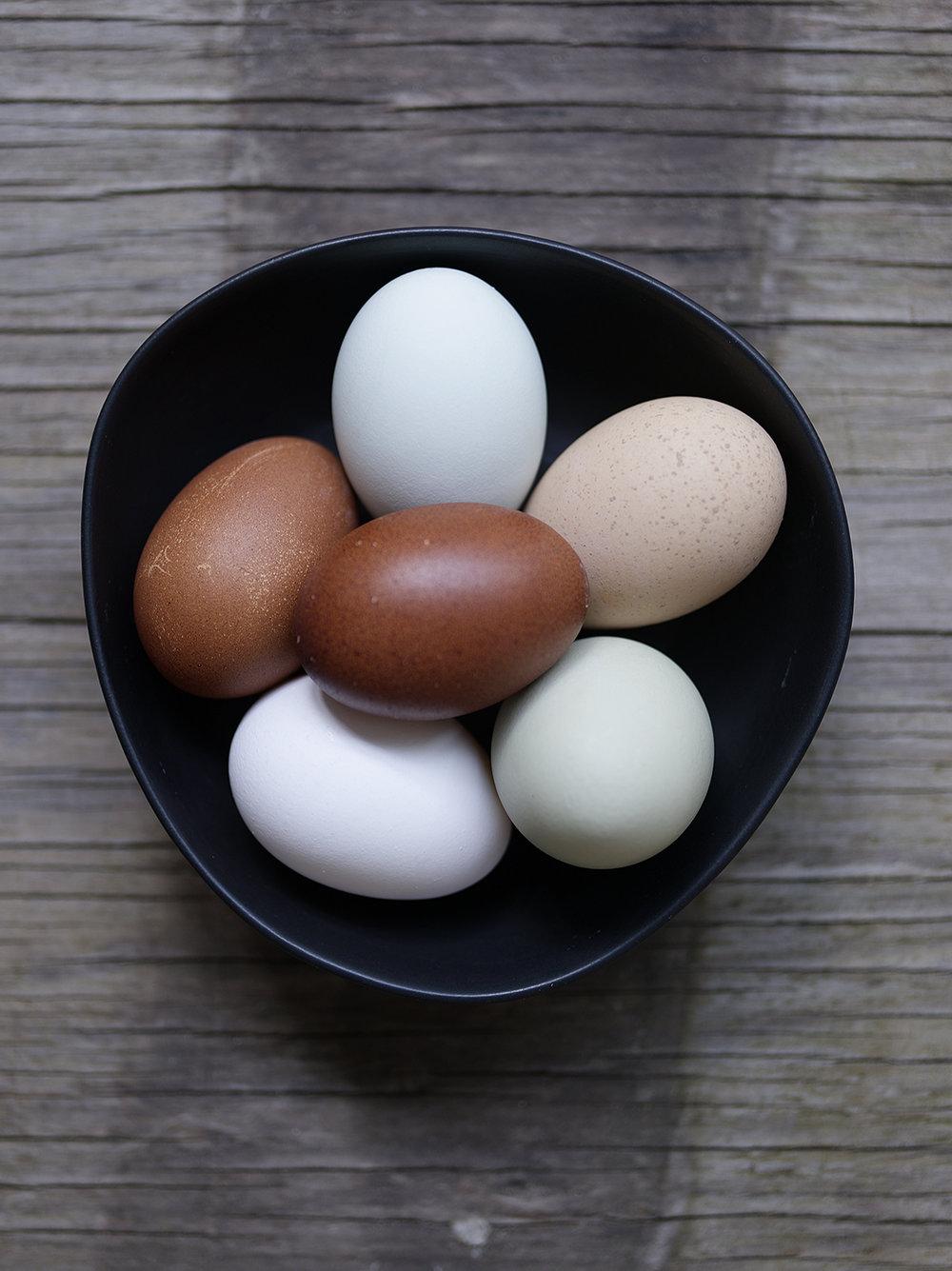 jeffreymschad_eggs.jpg