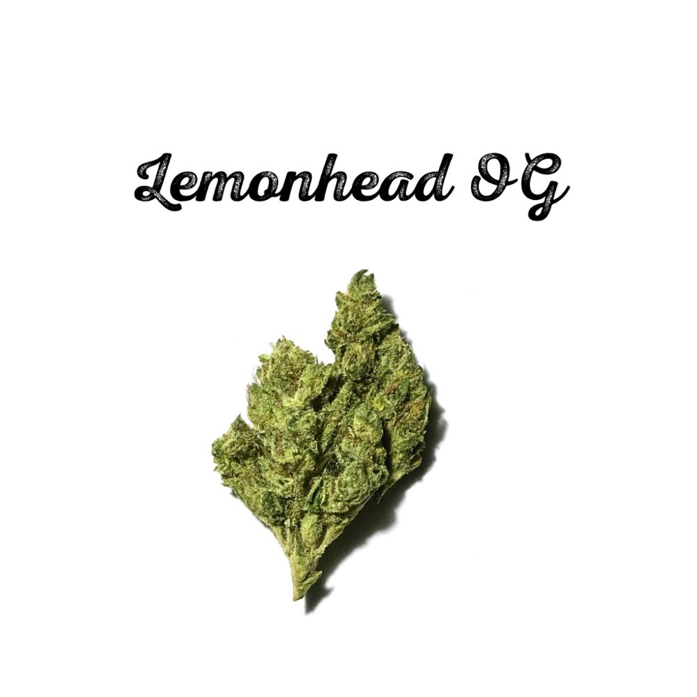 Lemonhead OG.png