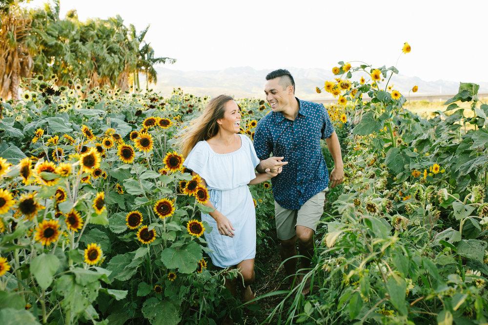 Oahu Sunflower Fields