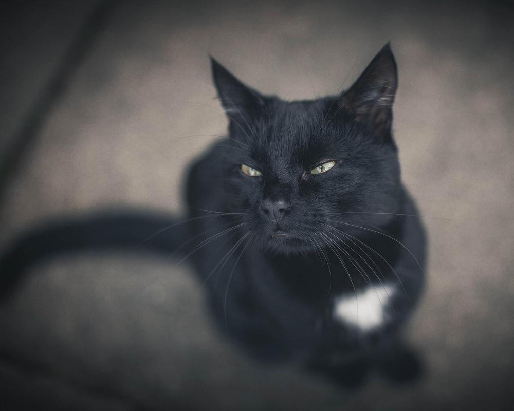 smilingcat.jpg