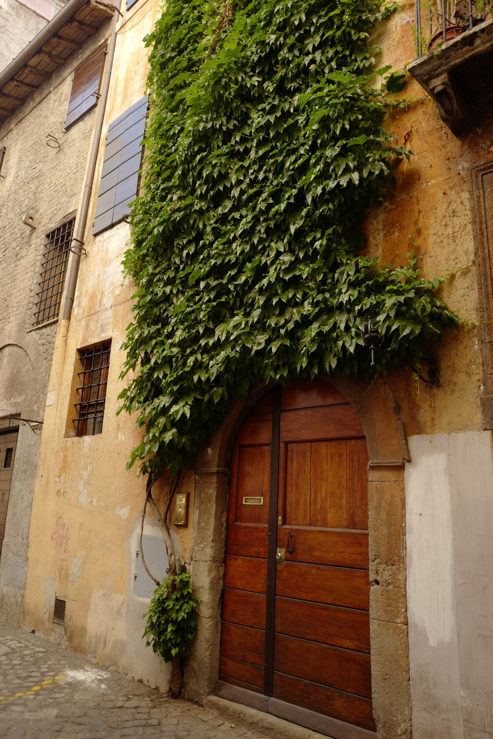 Vine covered walls, one of my favorite small details seen in Rome