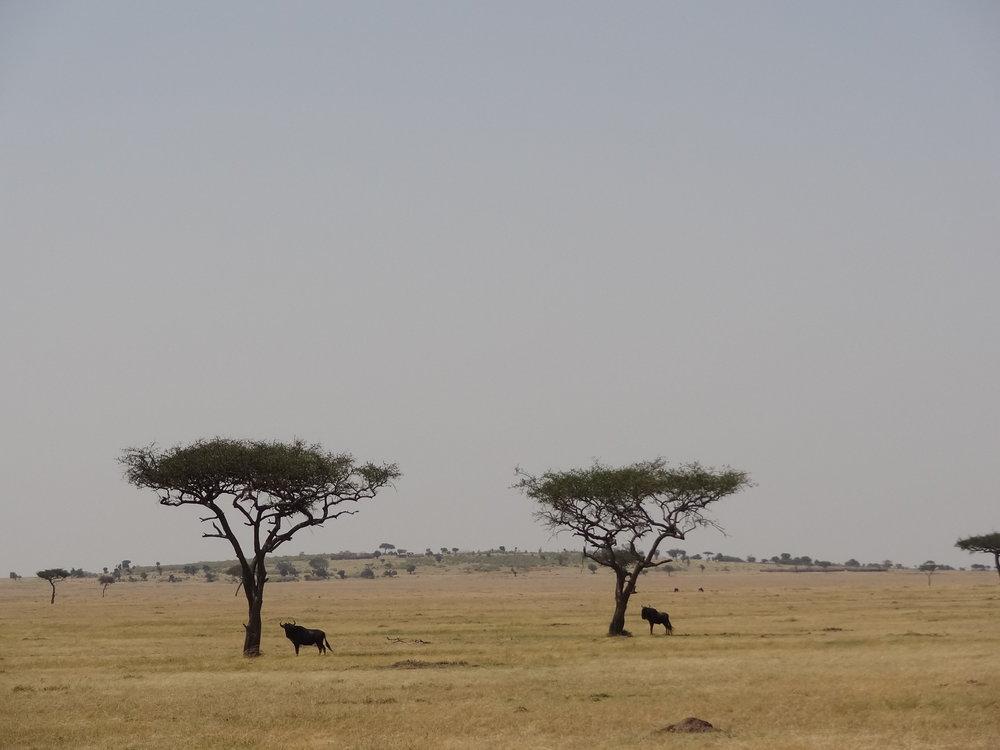 Kenya 2018 013.JPG