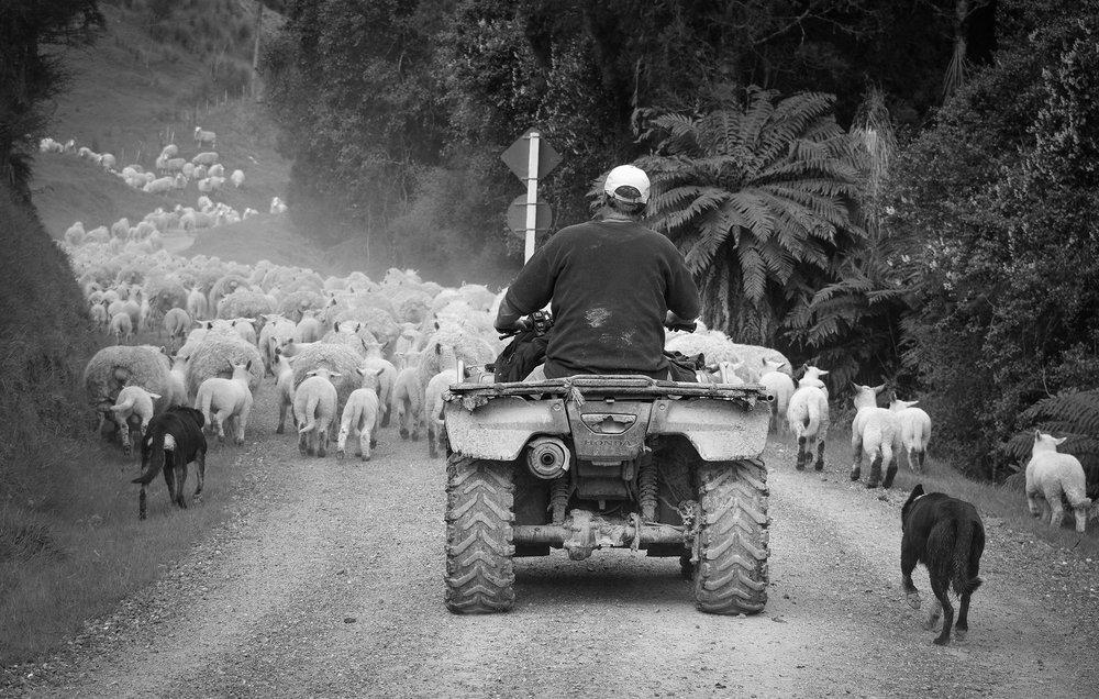 Activity-farm-tours.jpg