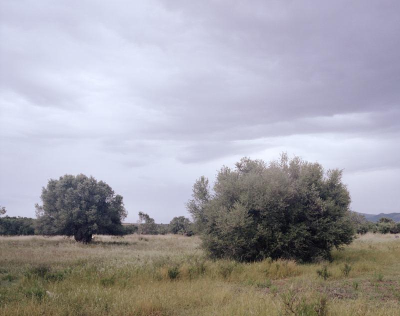 pentax 67 | takumar smc 55mm/f4