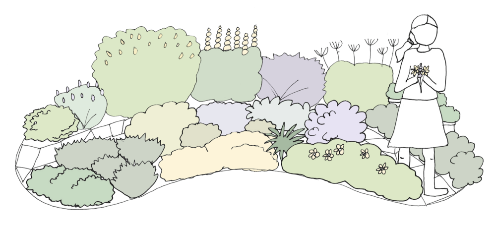My Own Edible Landscape_The-Chamomile_Design.png