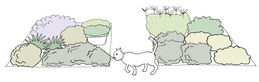 My Own Edible Landscape_The-Cilantro-Design.png