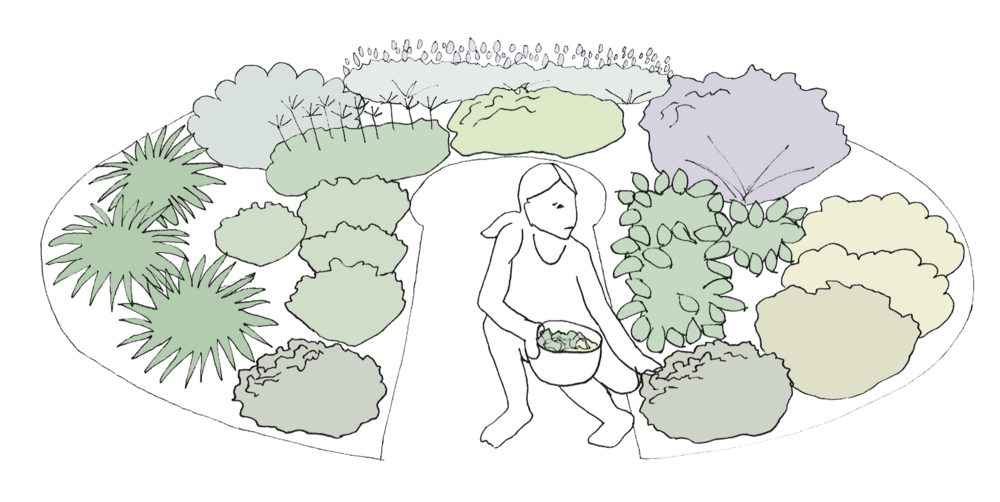 My Own Edible Landscape_The-Thyme-Design.png