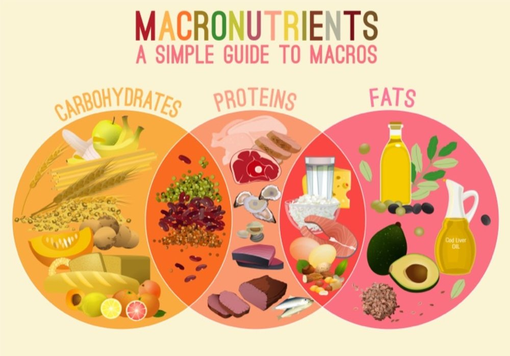 macronutrients.jpg
