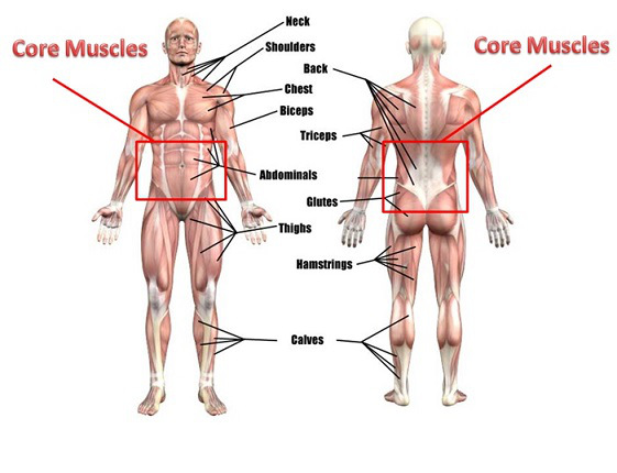 image from:  http://coremusclesdoshinishi.blogspot.com/2017/02/list-of-core-muscles.html