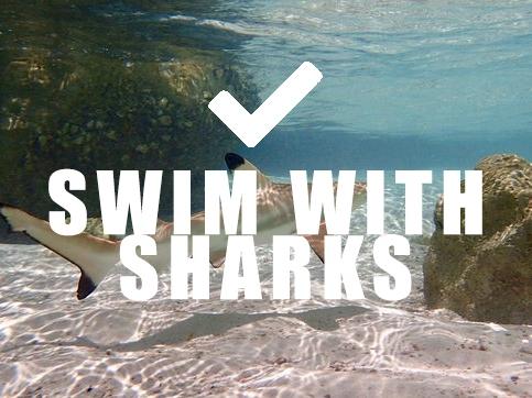 SHARKS.jpg