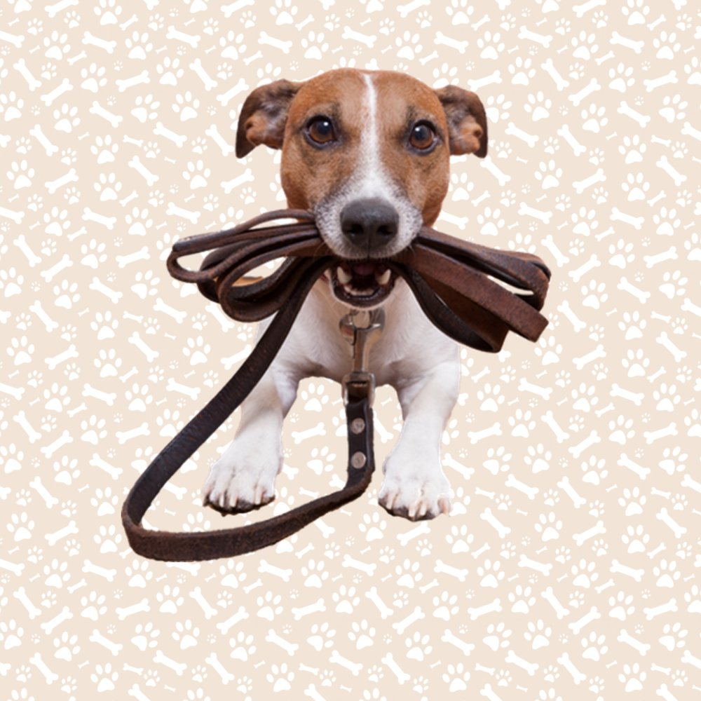 Collars, leads & harnesses -