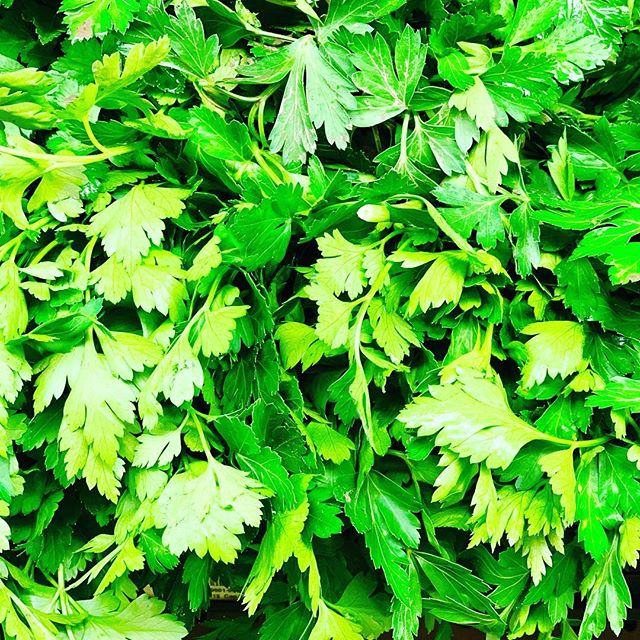 "Parsley  Parsley is the world's most popular herb. It derives its name from the Greek word meaning ""rock celery"" (parsley is a relative to celery). It is a biennial plant that will return to the garden year after year once it is established. Highly nutritious, parsley can be found year round in your local supermarket.  Parsley is a Rich Source of Anti-Oxidants! #parsley #veganfood #menshealth  #kidneystones #detox #medicinalherbs #cleandiet #cleanse #greencleanse #greensmoothiecleanse #nutrition #healthcoach #naturalhealth #plantbased #plantbaseddiet #plantdiet #fitam #diet #dietplan #nutrition #inshape #fitnotskinny #loveyourbody #green #liverdetox #instadaily #transformation #goodhealth #energyfood #hearthealth  www.RegenerAte5280LLC.com"