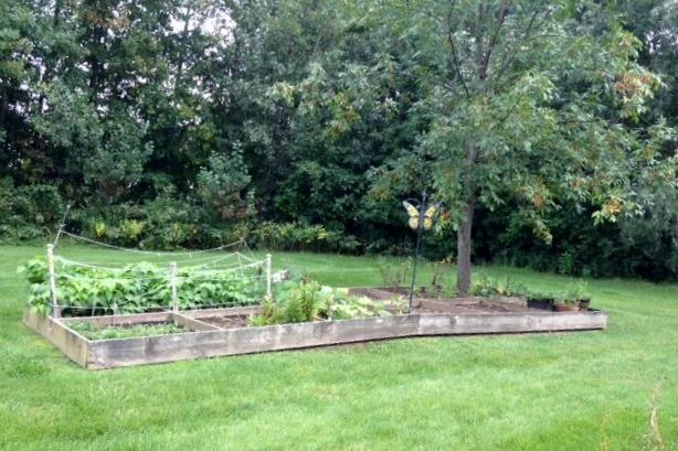 Resident Vegetable Garden.JPG