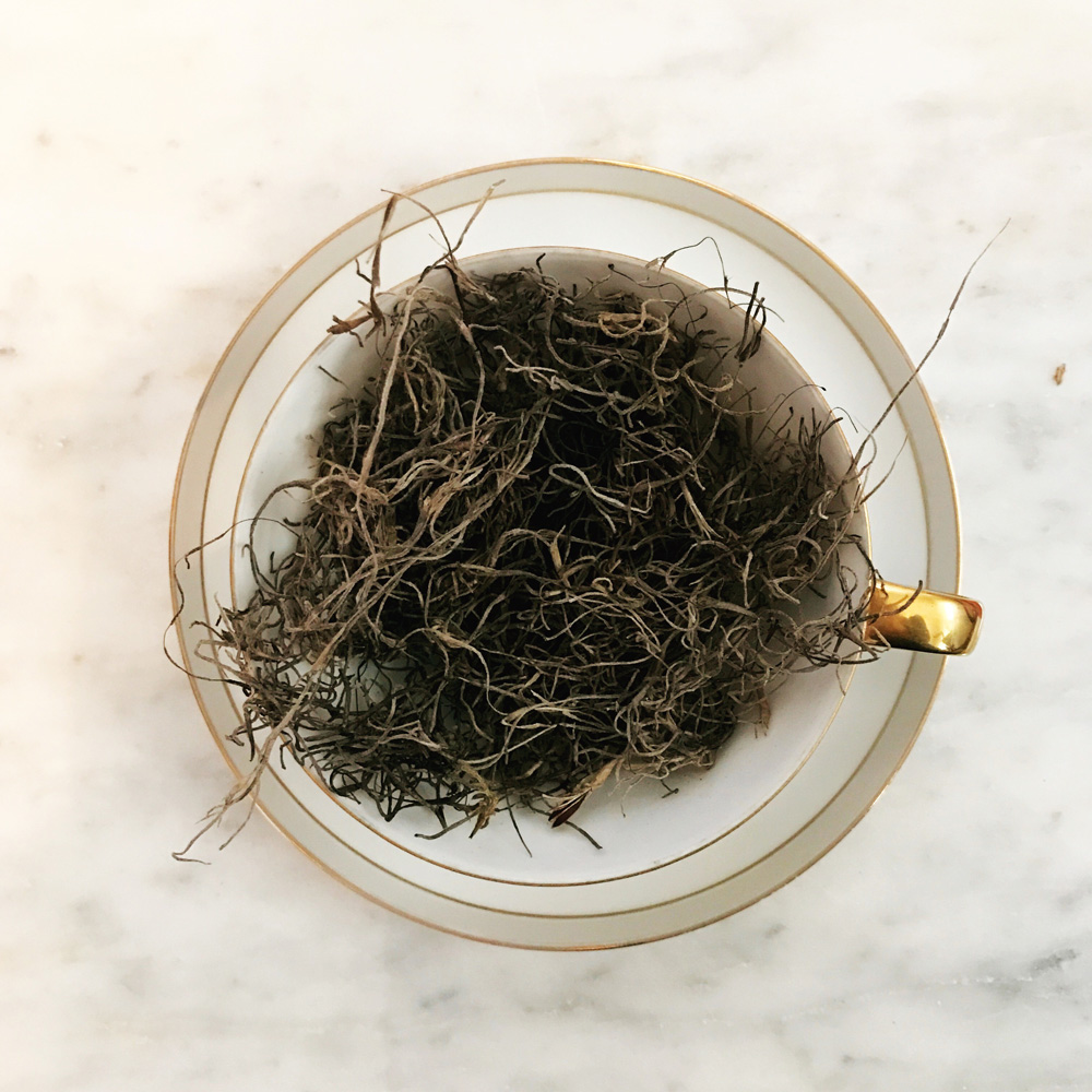 Moss in a tea cup.