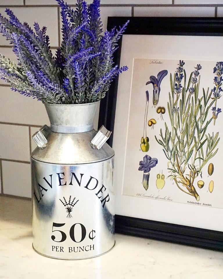 Galvenized metal milk jug with lavendar botanical print for Spring decor.