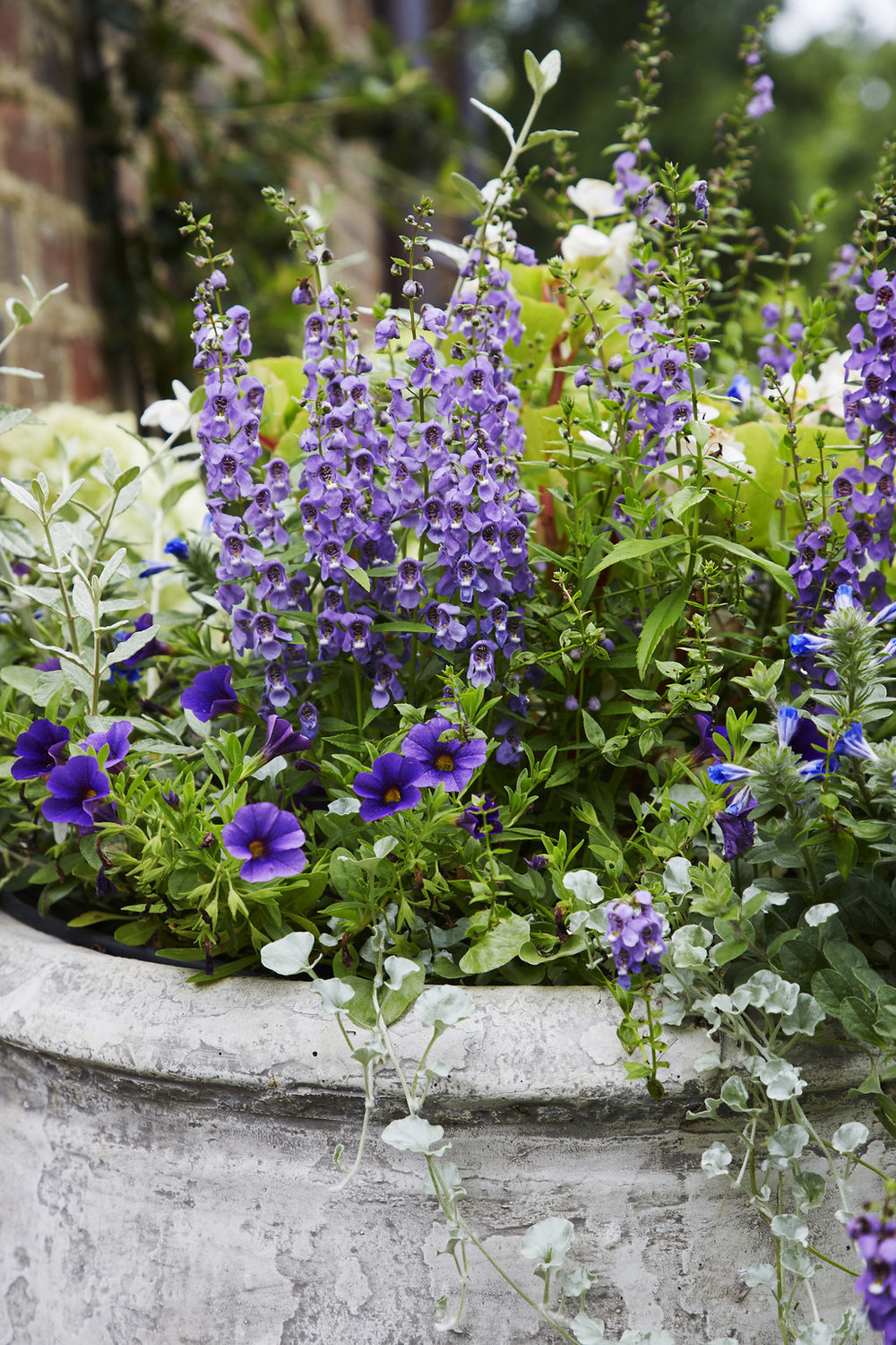Close up of the lavender and violets inside of the custom built planters.