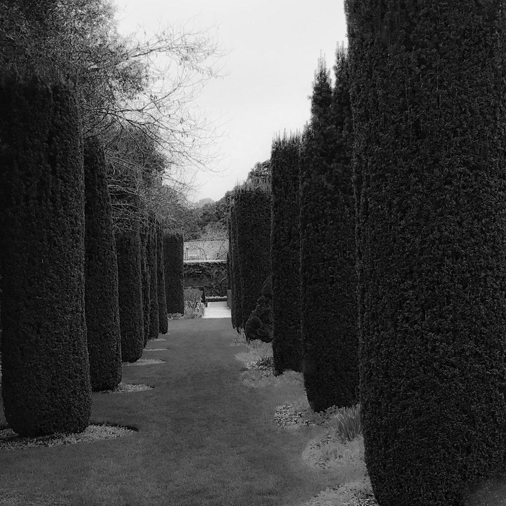 filoli trees garden-Edit.jpg