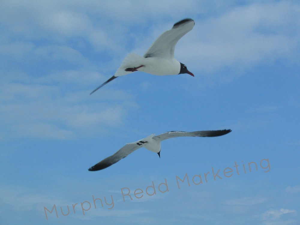 Destin Seagulls