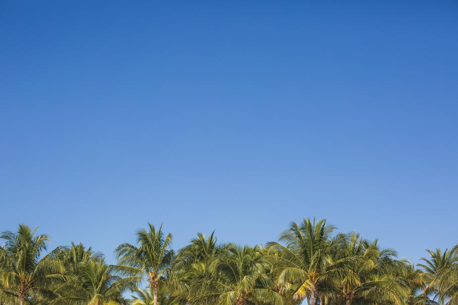 palm-trees-under-blue-sky_925x.jpg