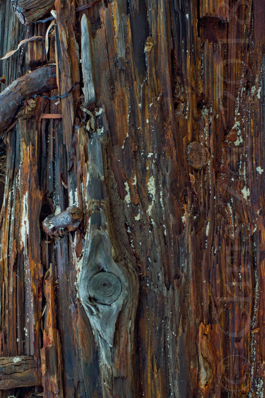"""""""Wood Study II"""", 2014"""