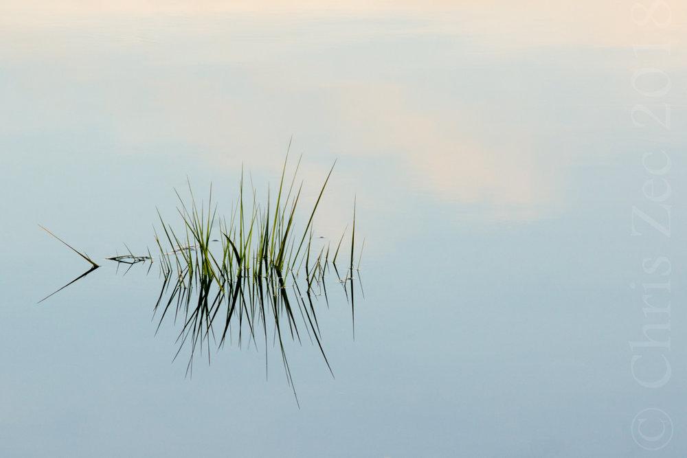 """Reed Reflections, No.1"", 2014"