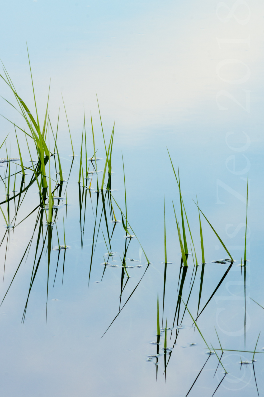 """Reed Reflections, No.2"", 2014"
