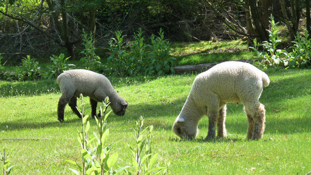 chalet-in-the-woods-sheep-4-e1490297767111.jpg