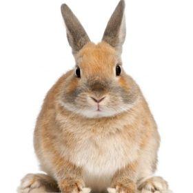 rabbit_x_280.jpg