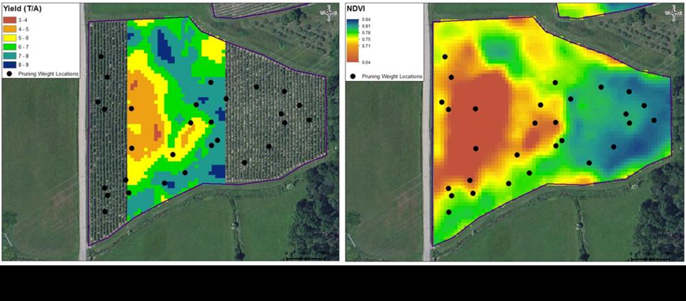 yield-NDVI-maps.png