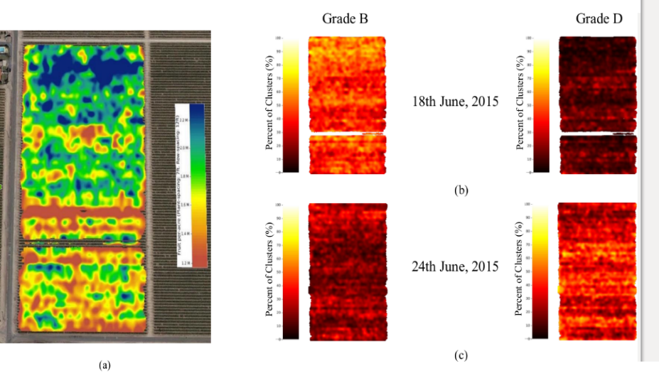 Figure 4: Spatial Maps of the Flame Seedless Vineyard: (a) Yield Map of the berry count across the field. Spatial Map of percentage of clusters for Grades B and D on the 18th June (b), 24th June (c).