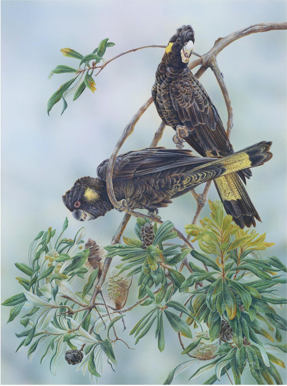 """Banksia Bouquet"" by Peta Boyce"