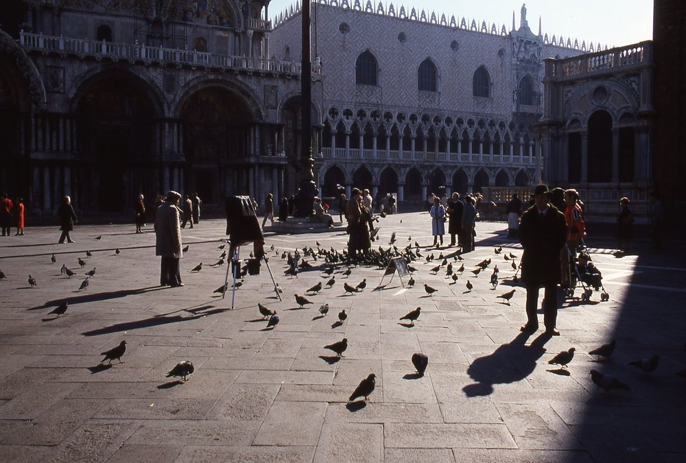 Venice | Pigeons on Saint Marc place  | photo sandrine cohen