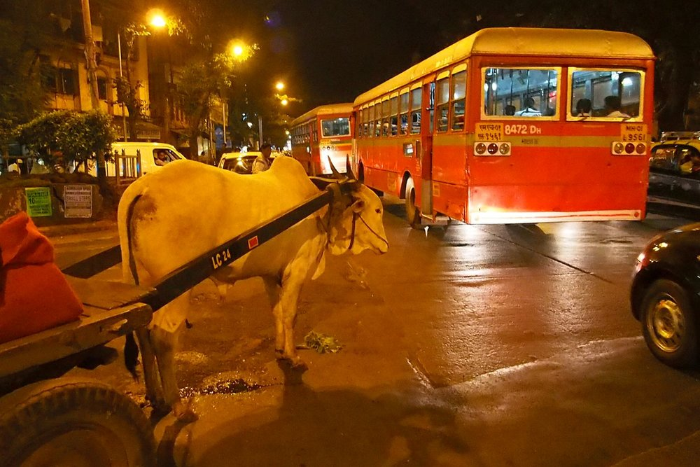 Mumbai - Bombay | traffic at the night in Mumbai | Cow on the traffic | ©sandrine cohen