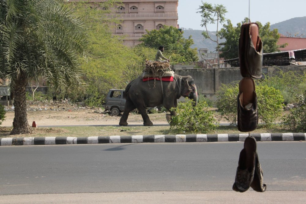 Jaipur | Rajasthan | Elephant Mahout and shoes | ©sandrine cohen