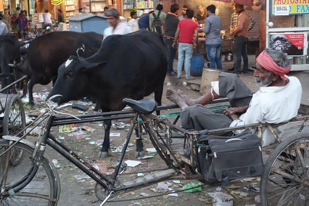 Jaipur sdf.jpg