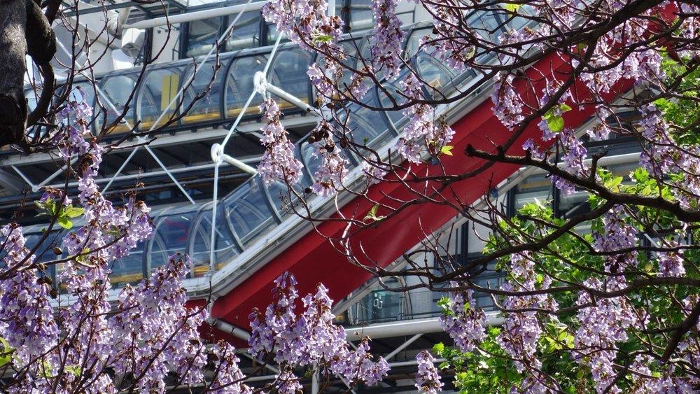 Paris | Centre Pompidou | Spring | Fleurs de printemps au Centre Pompidou | photo sandrine cohen
