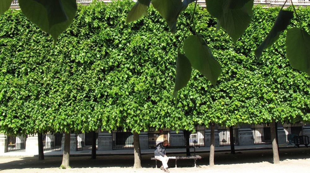 Jardin du Palais Royal à Paris | Un homme lit sous les arbres du Palais Royal | photo sandrine cohen
